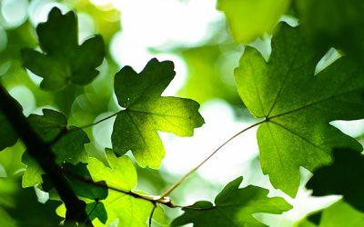 Medio ambiente y Agricultura