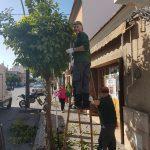 Continúan los trabajos de poda en las calles de Almoradí