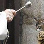 Bendición de animales